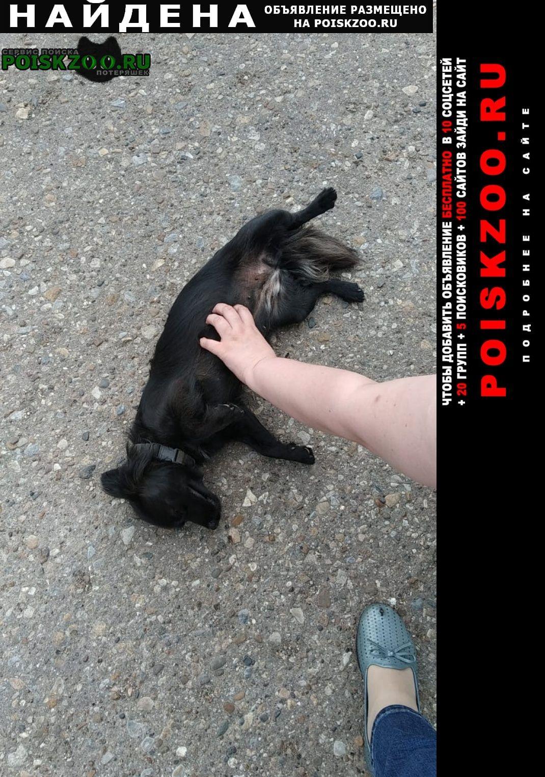 Найдена собака Альметьевск