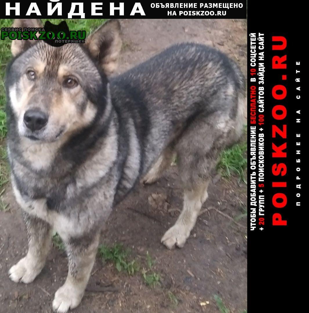 Найдена собака кобель в поварово Солнечногорск