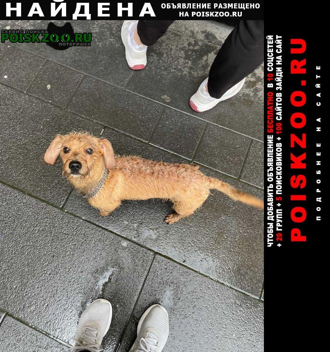 Найдена собака Зеленоград