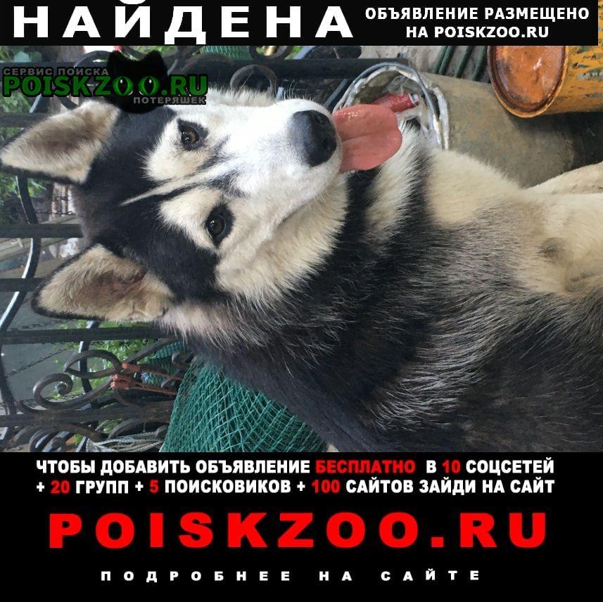 Найдена собака кобель хаски ищет хозяина Ростов-на-Дону