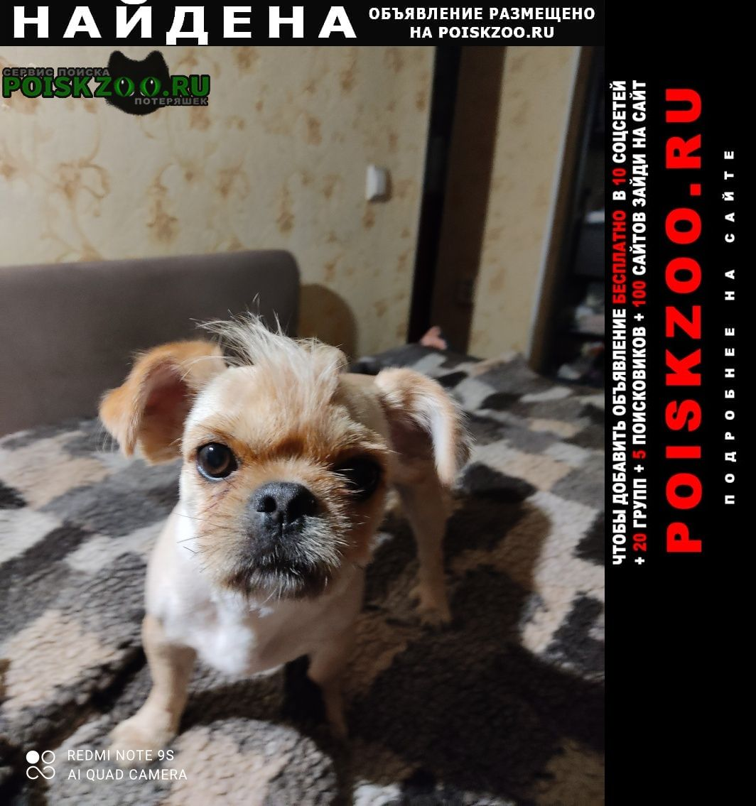 Найдена собака кобель Магнитогорск