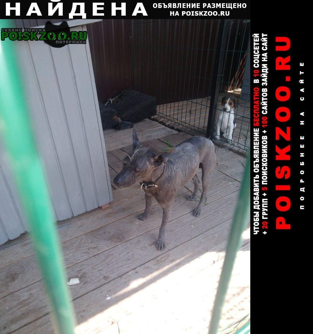 Найдена собака кобель Энгельс