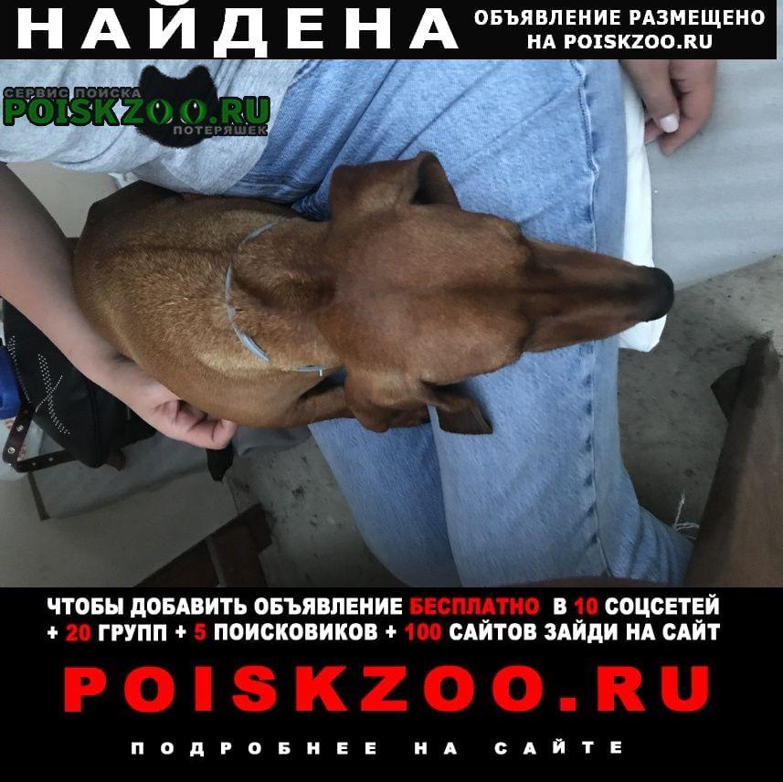 Найдена собака кобель такса, мыс фиолент. Севастополь