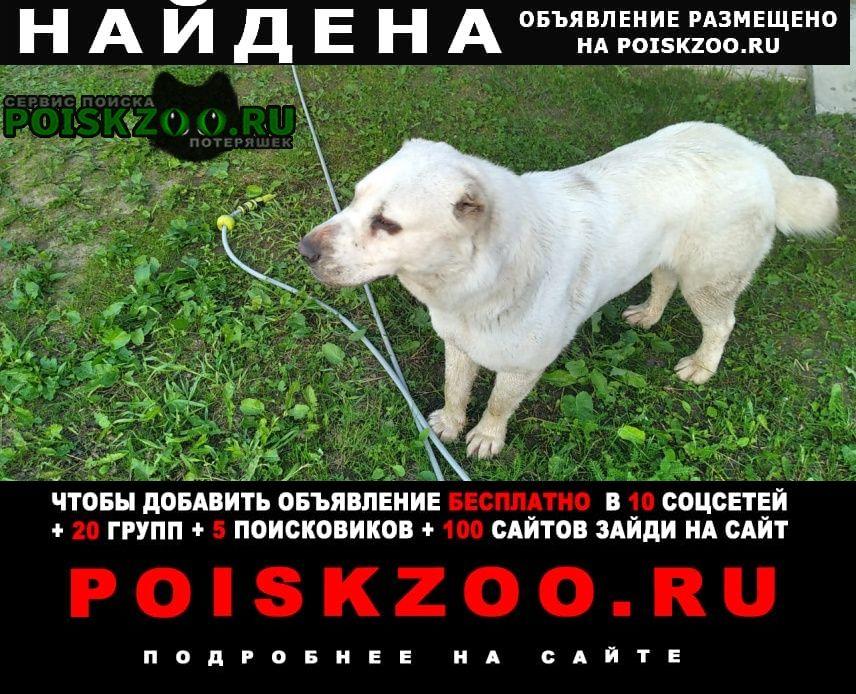 Найдена собака алабай, белый, с. синьково Раменское