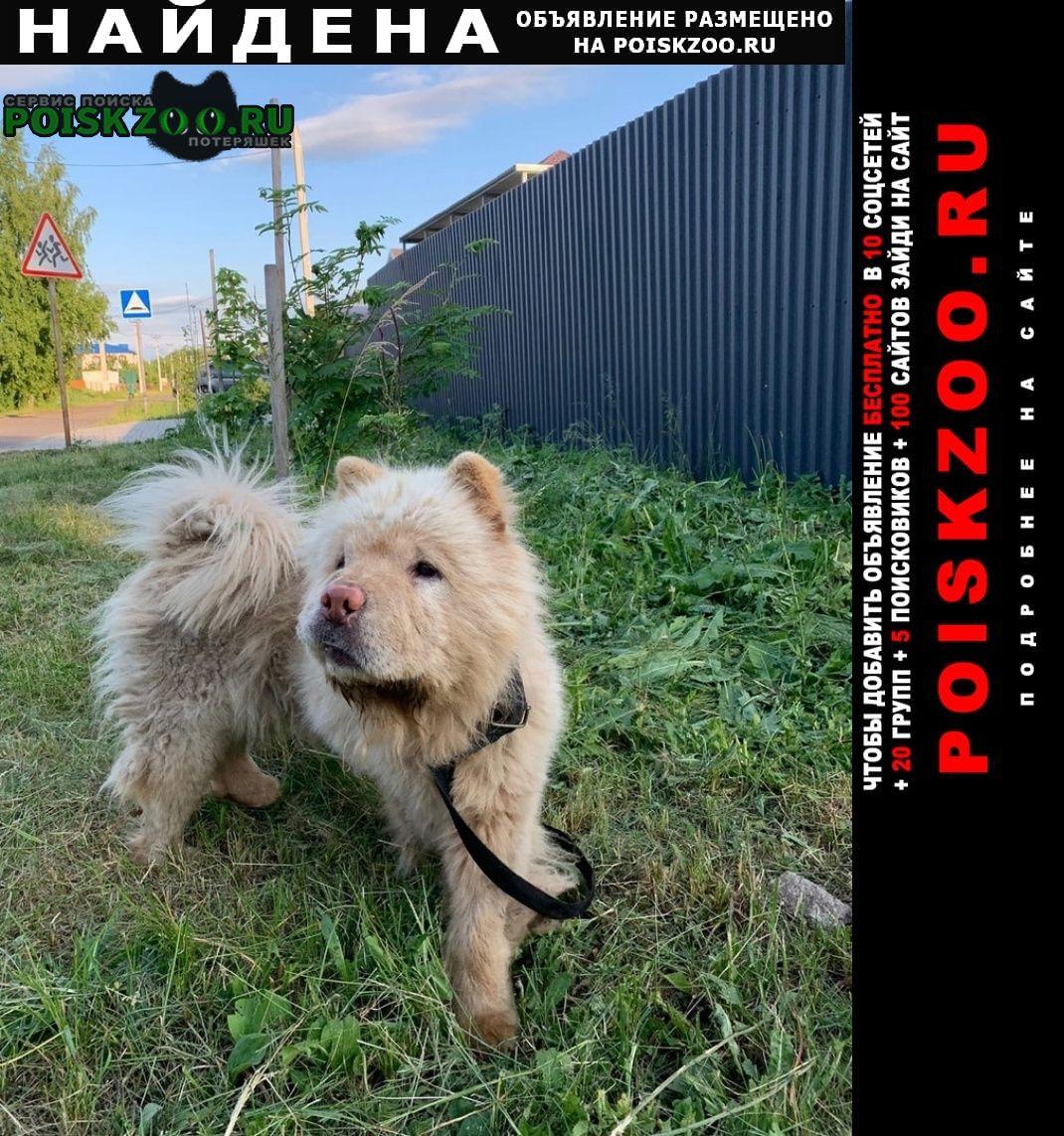 Найдена собака кобель порода чау-чау Лаишево