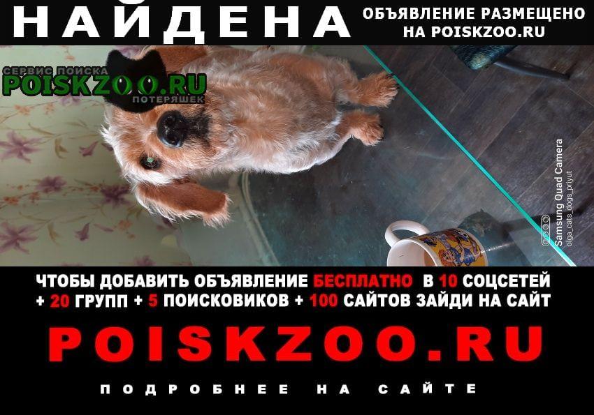 Найдена собака кобель бородатик. Зеленоград