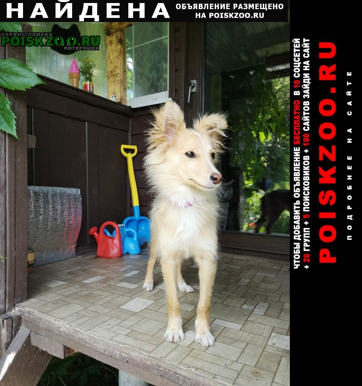 Найдена собака неизвестной породы Кашира