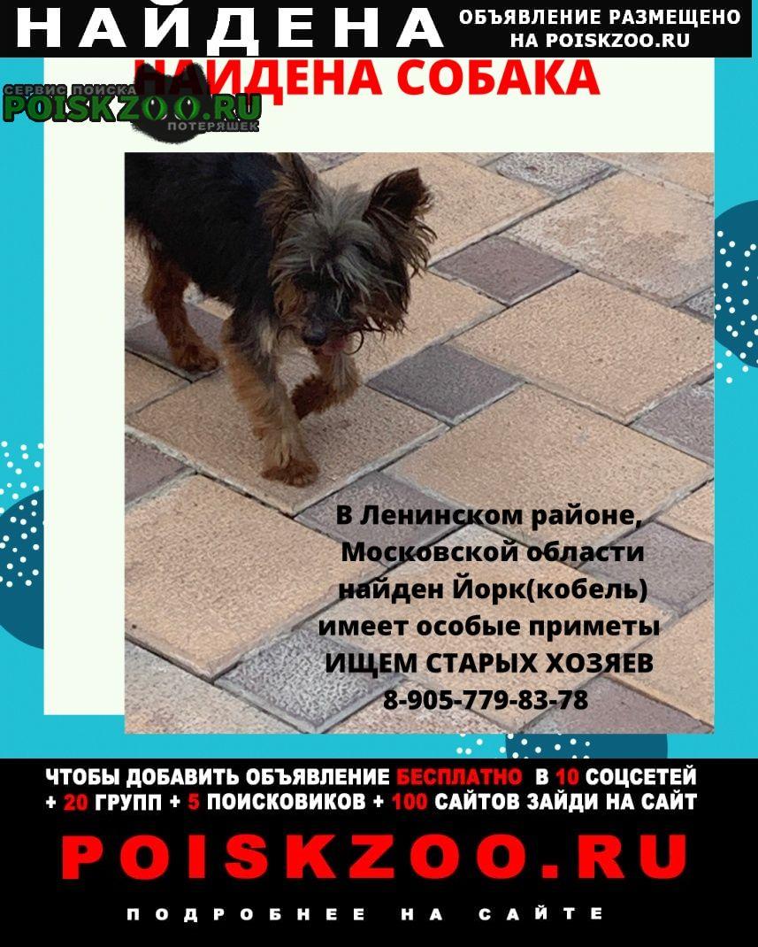 Найдена собака кобель йорк чёрного цвета Видное