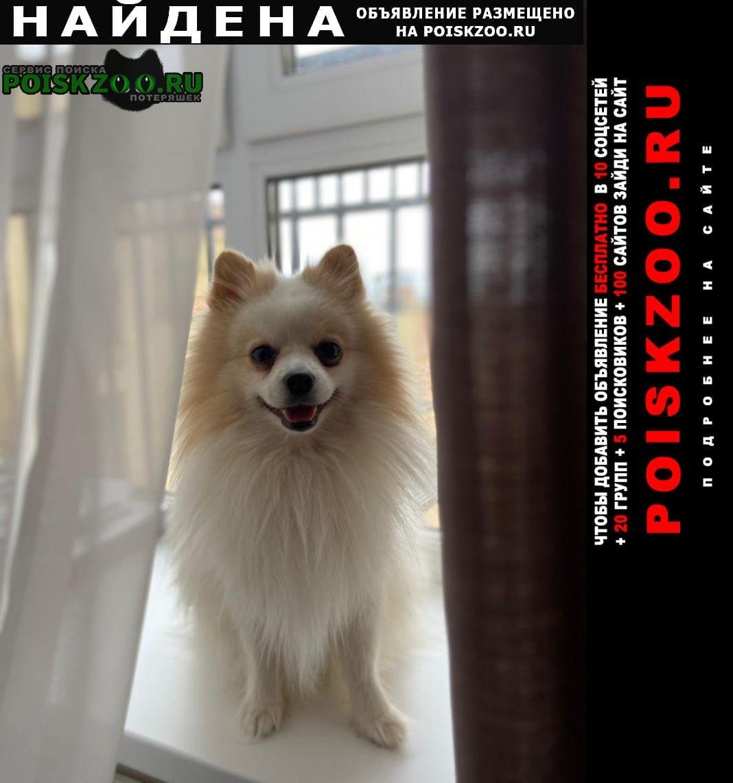 Найдена собака Истра