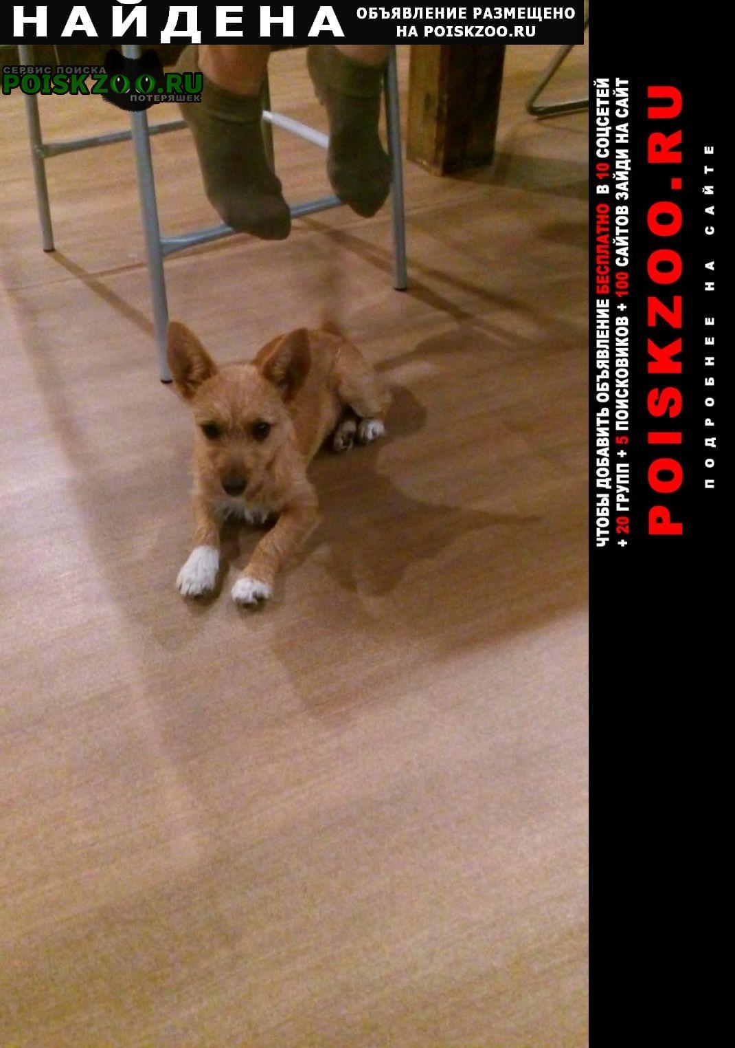 Найдена собака Верхняя Сысерть