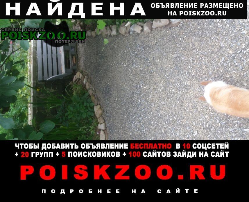 Найдена собака кобель алабай Сочи