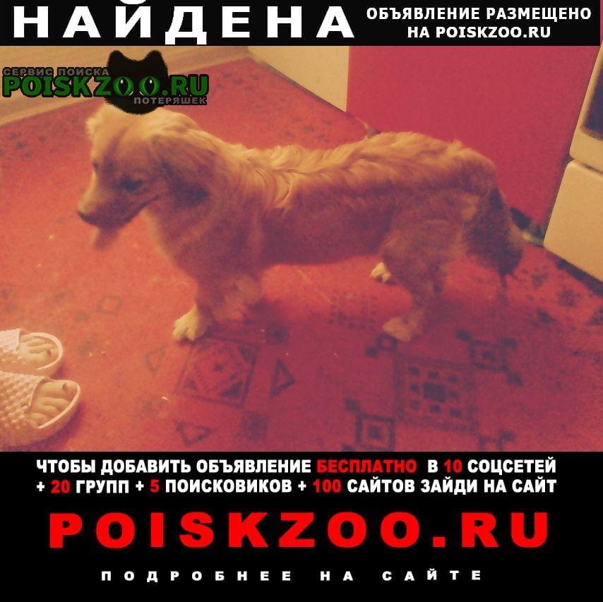Найдена собака кобель мальчик около года Нижний Новгород