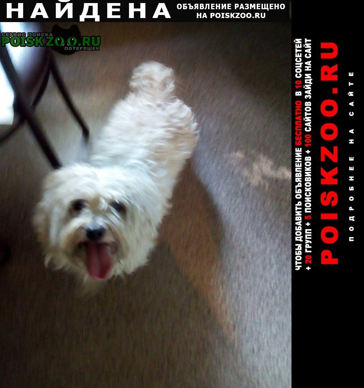 Найдена собака кобель белый Воронеж