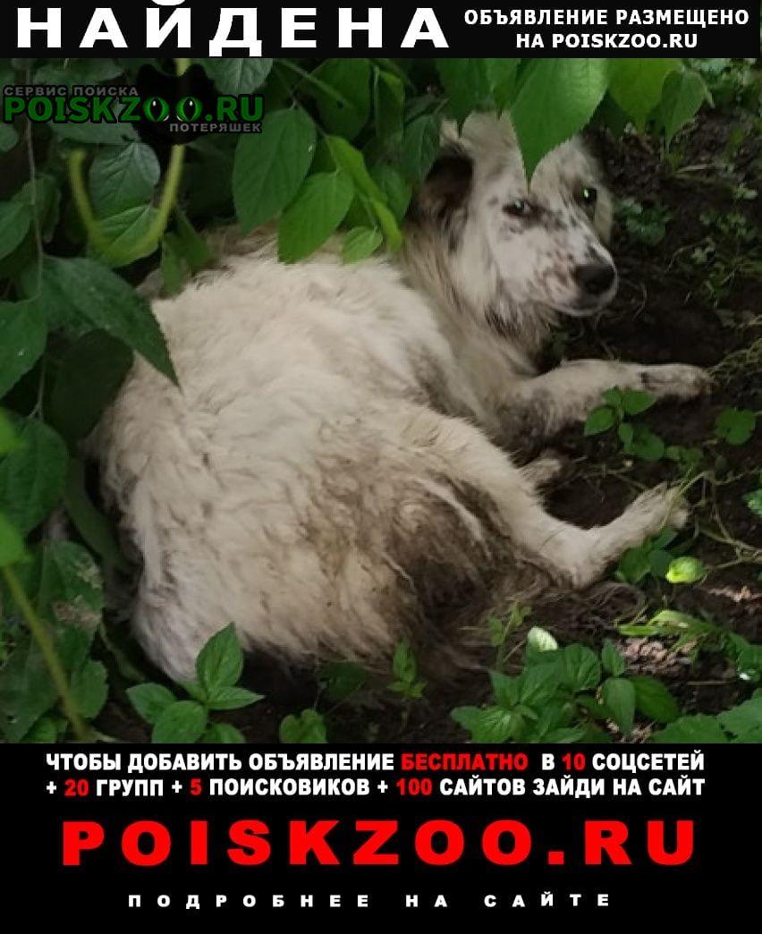 Найдена собака в ошейнике Ростов-на-Дону