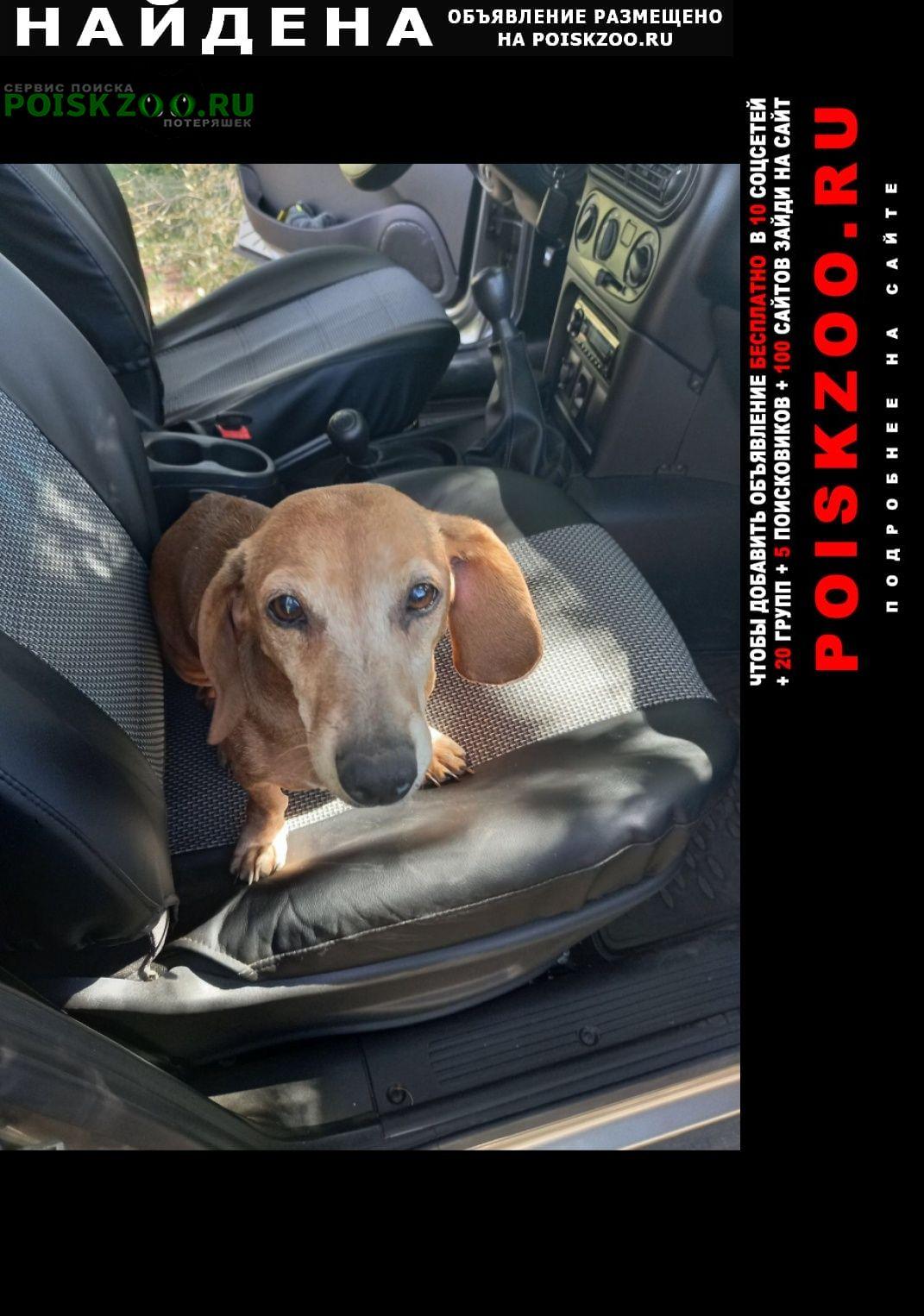Найдена собака такса Оренбург