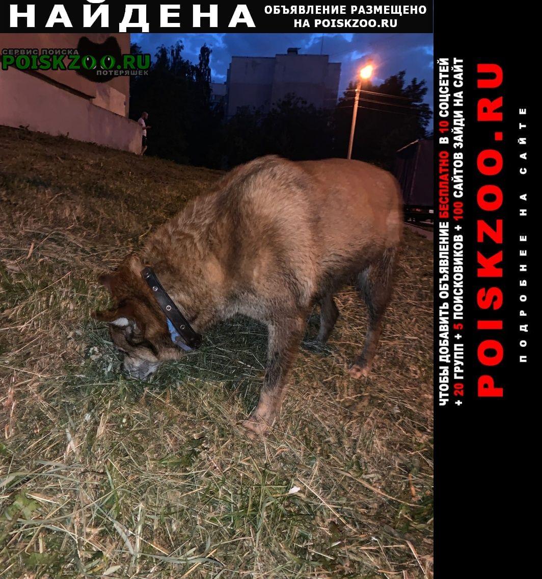 Найдена собака в пушкине Санкт-Петербург