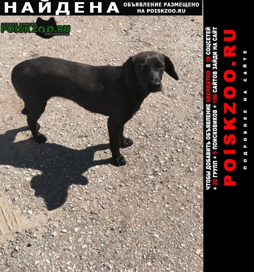 Найдена собака Моршанск