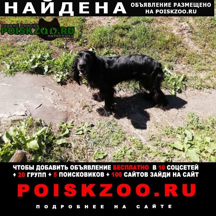 Найдена собака черная в арбеково Пенза