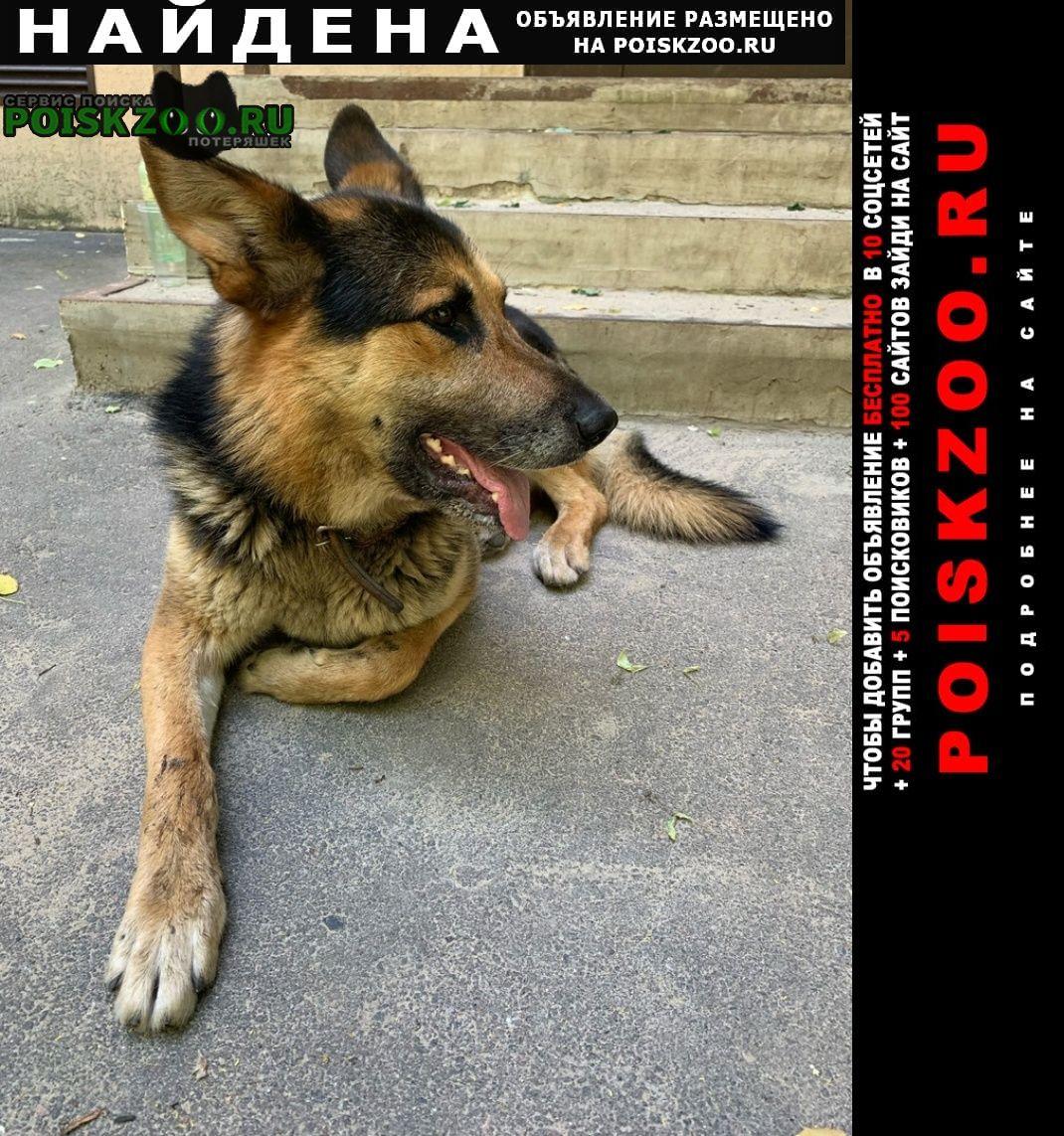 Найдена собака кобель немецкая овчарка Воронеж