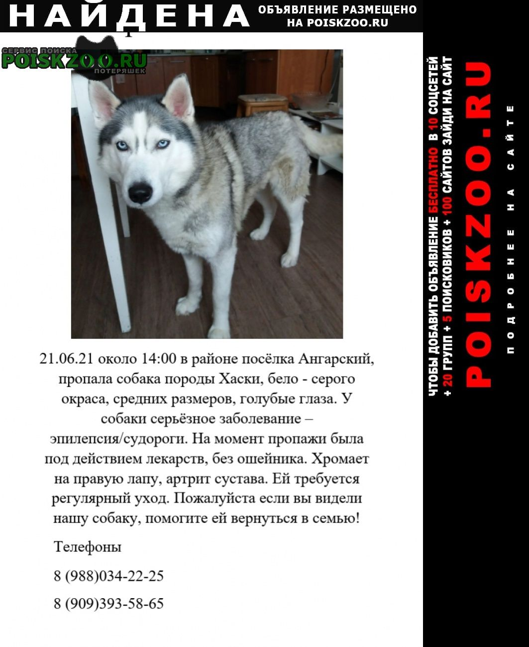 Найдена собака сибирский хаски Волгоград