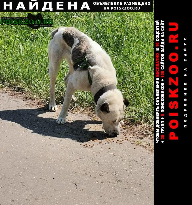 Найдена собака Хотьково