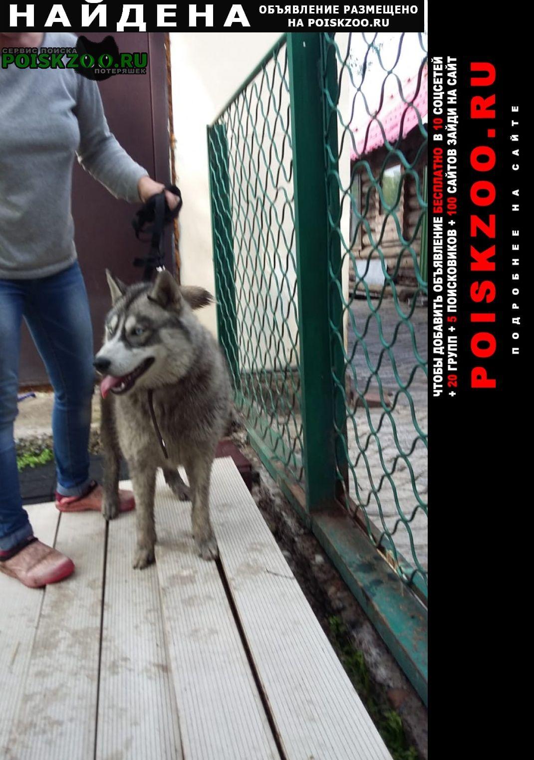 Найдена собака кобель Кемерово