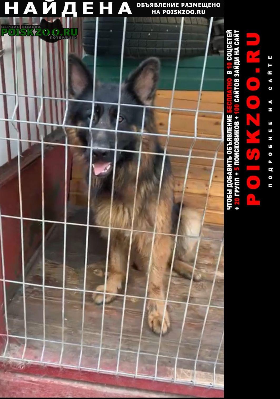 Найдена собака кобель немецкой овчарки Краснодар