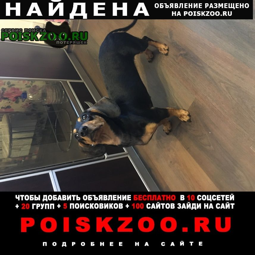 Екатеринбург Найдена собака такса