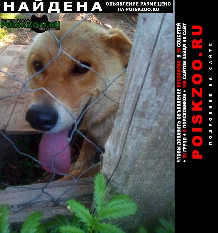 Найдена собака Ижевск