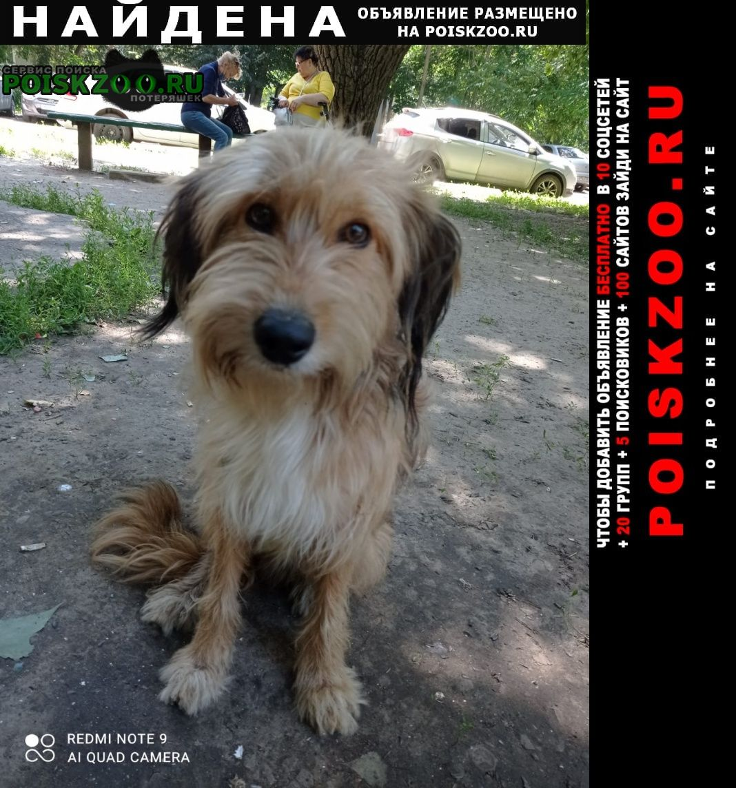 Ростов-на-Дону Найдена собака кобель пёсик ростов зжм