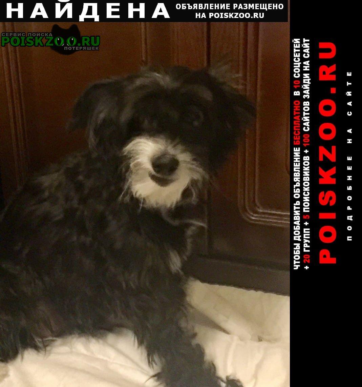 Найдена собака санаторная улица село марфино Мытищи