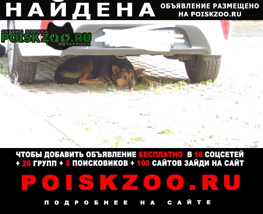 Найдена собака кобель кабель в ошейнике с шипами Санкт-Петербург