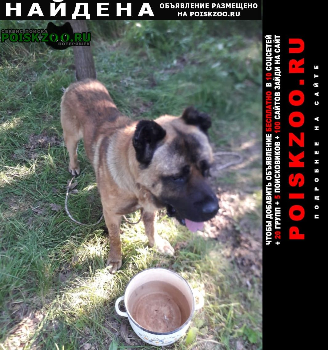Найдена собака кобель в районе пес Одинцово