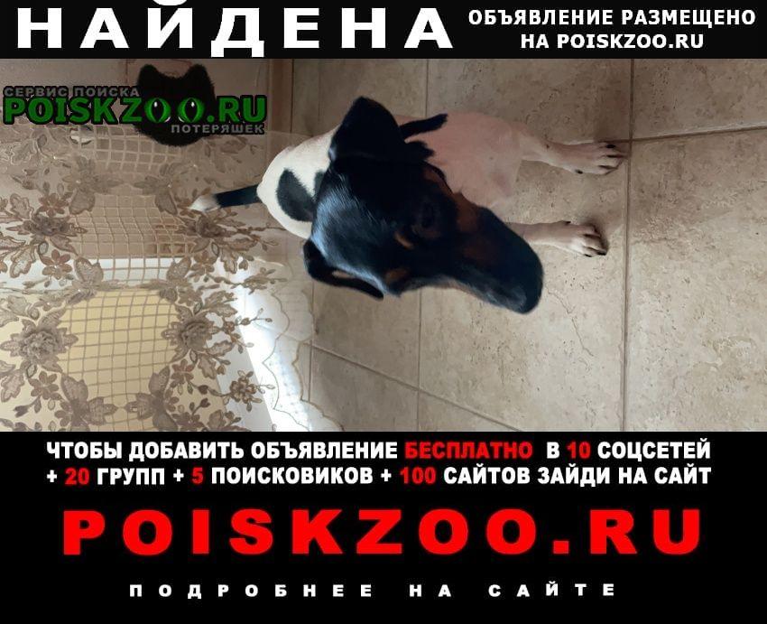 Ставрополь Найдена собака