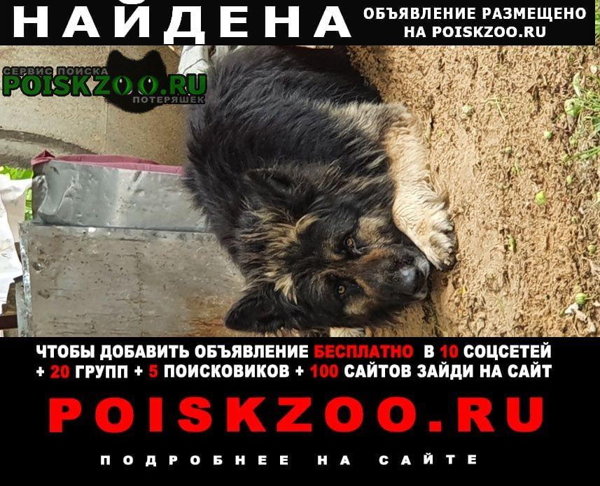 Можайск Найдена собака кобель д.юрлово