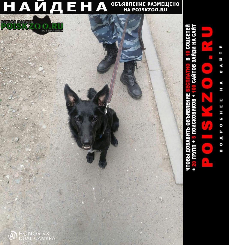 Омск Найдена собака кобель