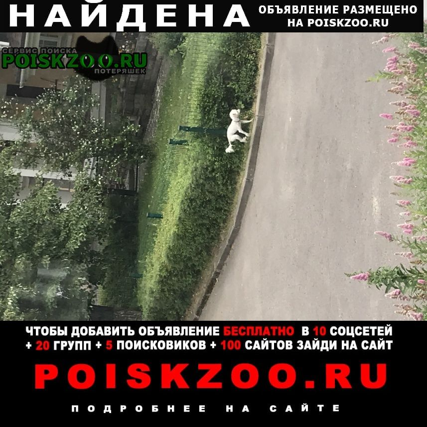 Найдена собака кобель белая ливретка Жуковский