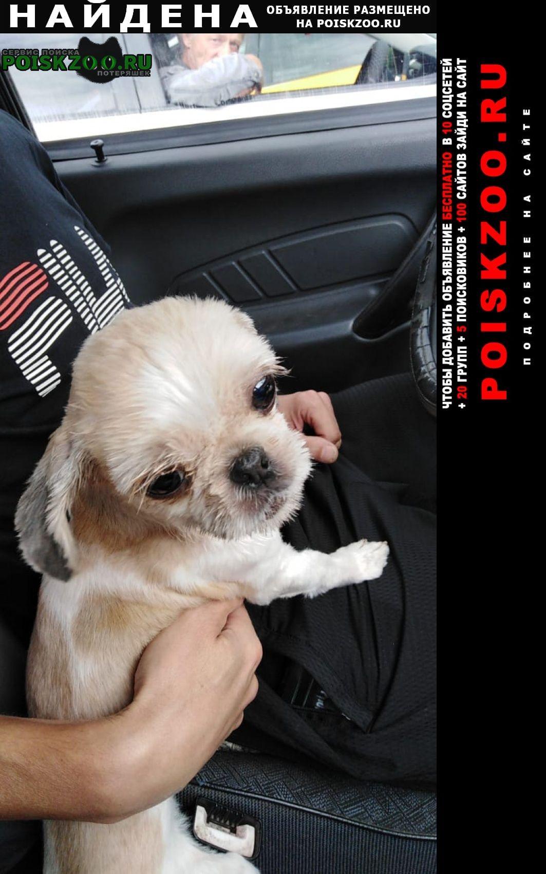 Михнево Найдена собака около д. дубнево