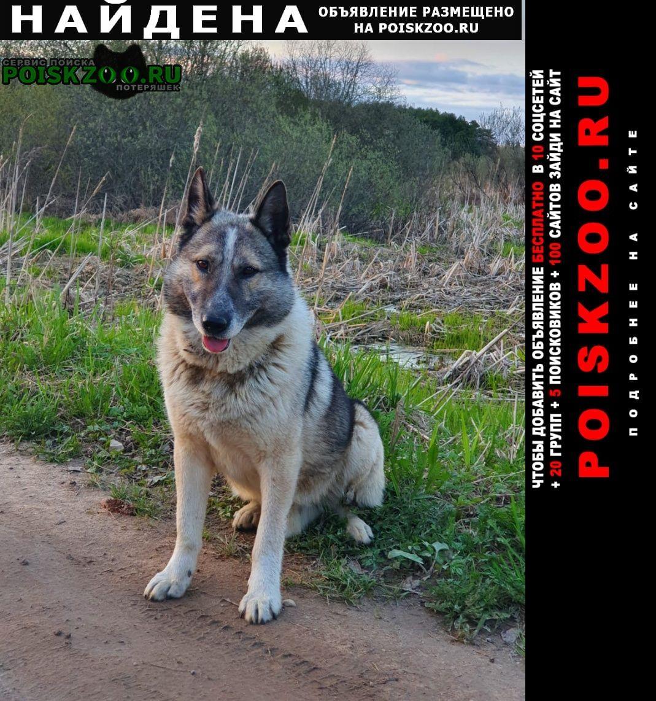Найдена собака кобель Дорохово