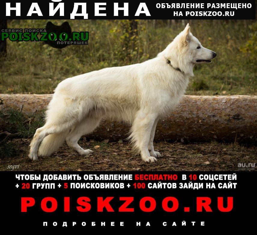 Уфа Найдена собака кобель фенотип швейцарская белая овчарка