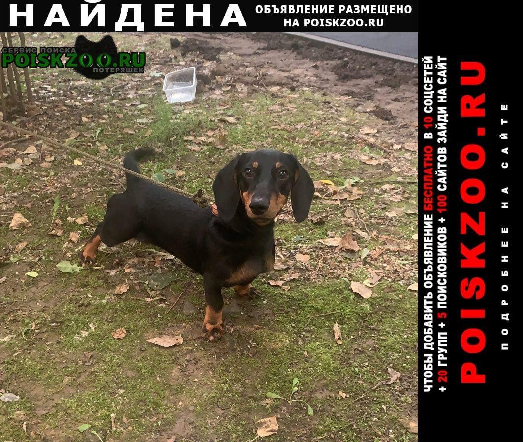 Найдена собака такса щенок девочка Москва