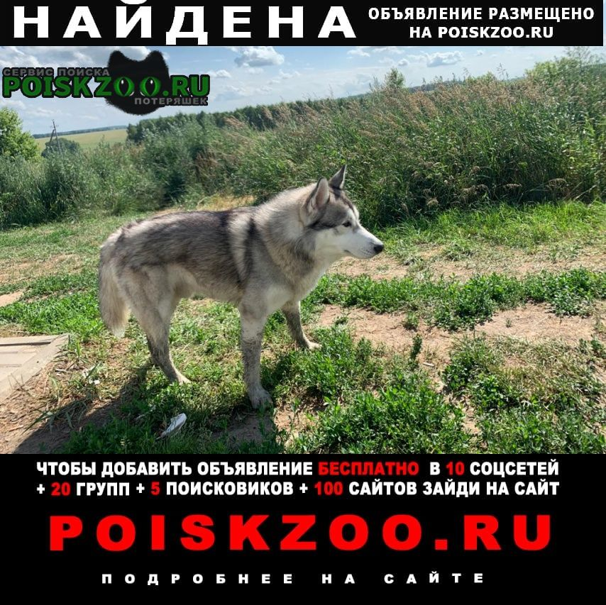 Венев Найдена собака кобель молодой хаски