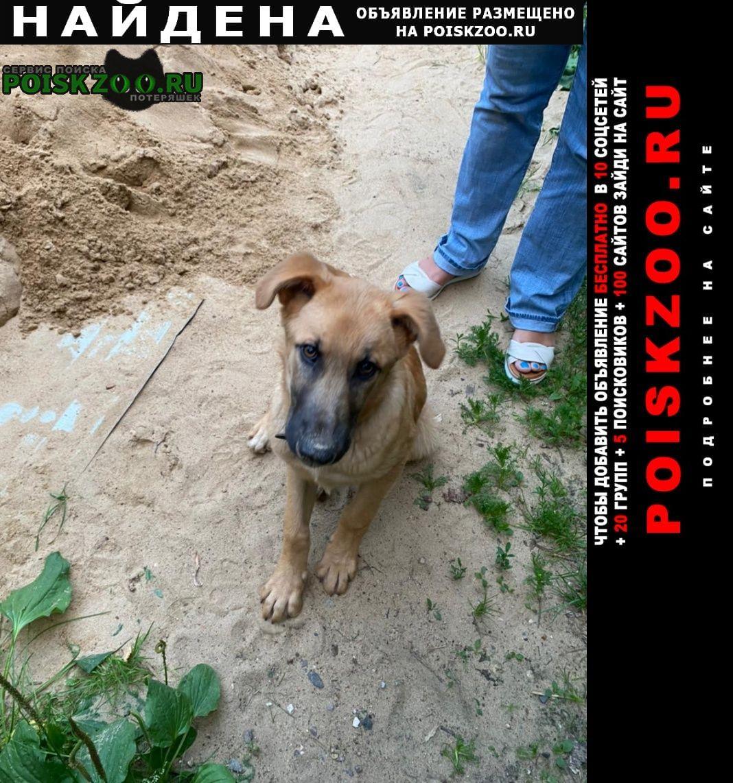 Найдена собака кобель щенок. на вид мес 6 Правдинский