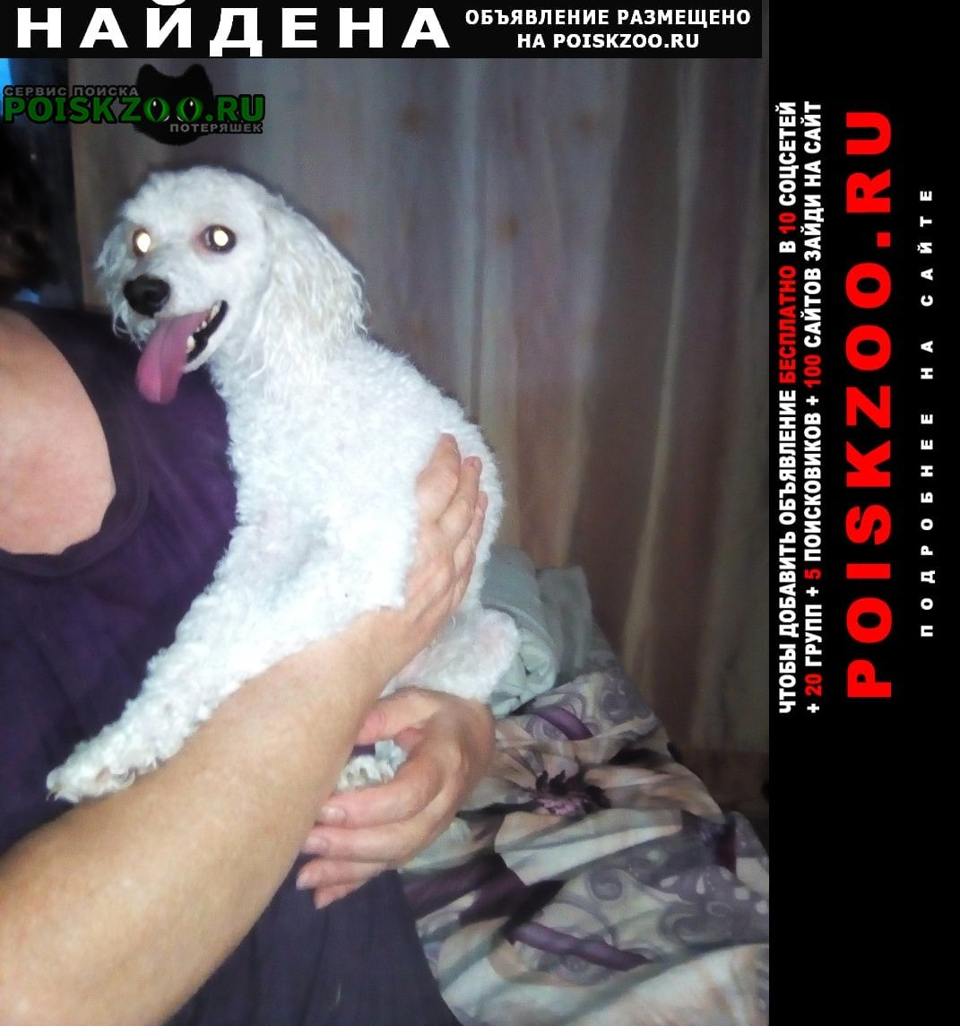 Владивосток Найдена собака кобель 03.07. карликового пуделя