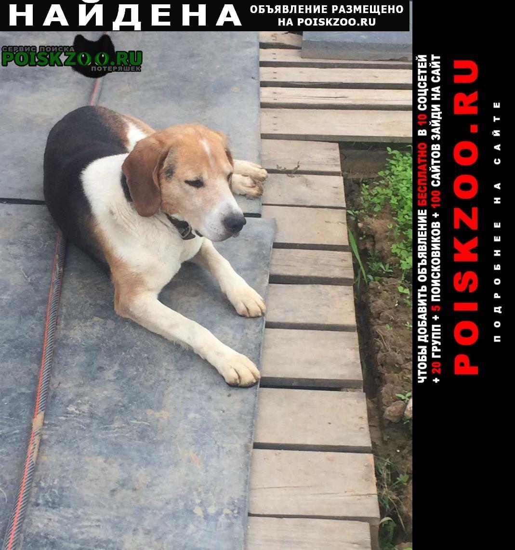 Найдена собака кобель Домодедово