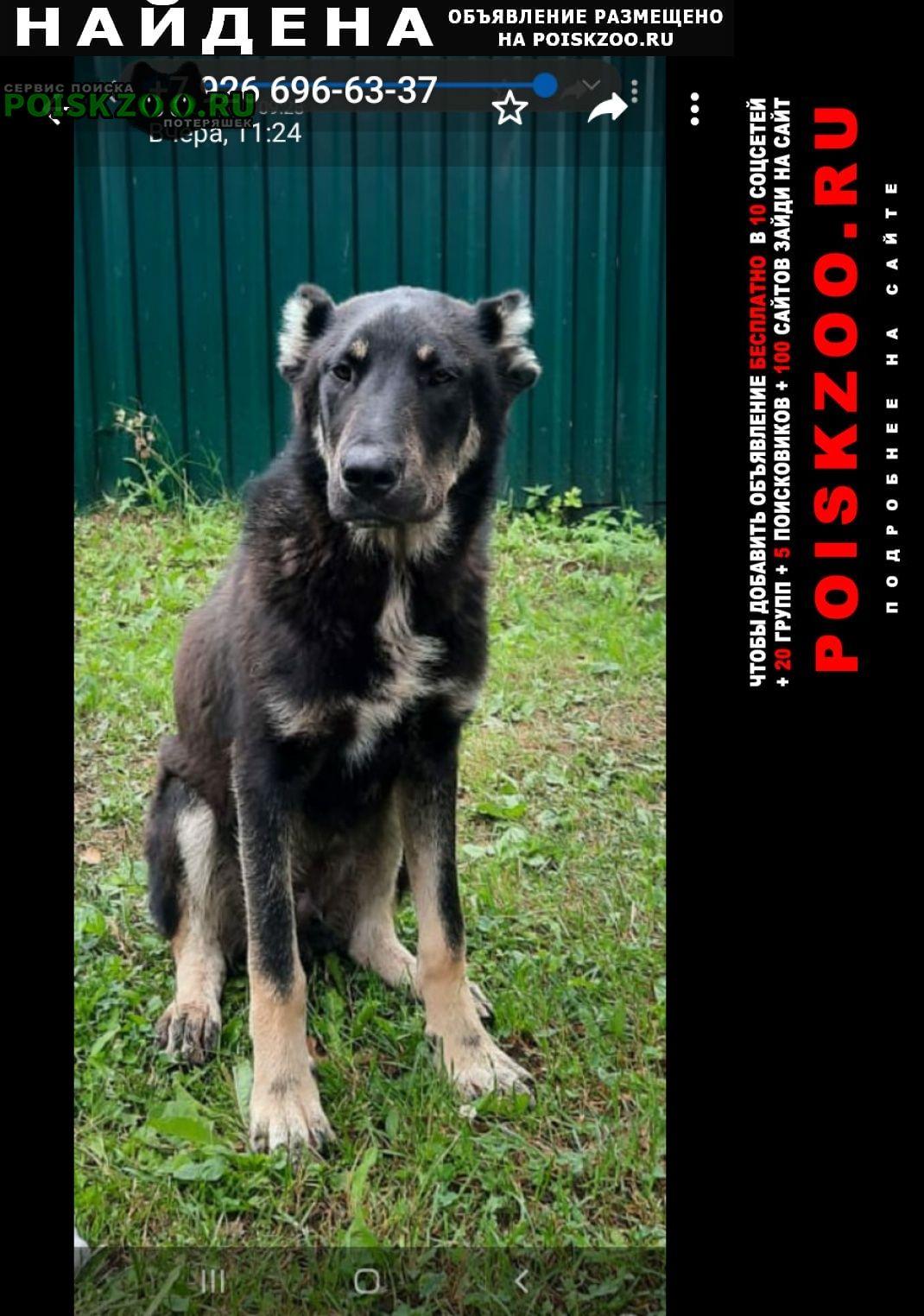 Найдена собака кобель алабай Александров