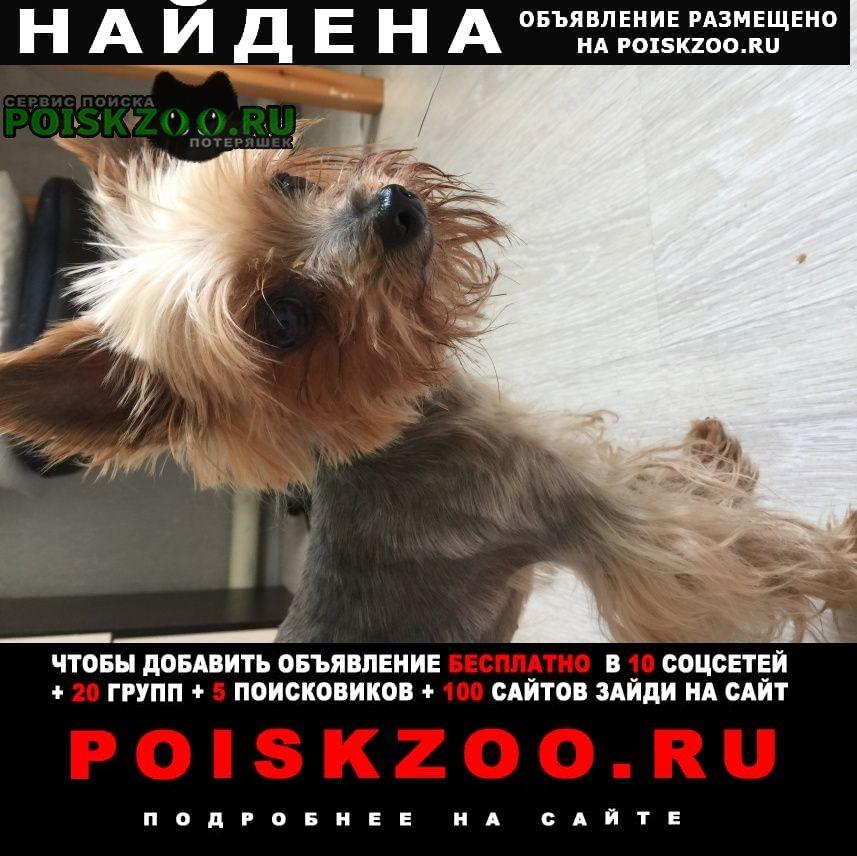 Найдена собака Новозыбков
