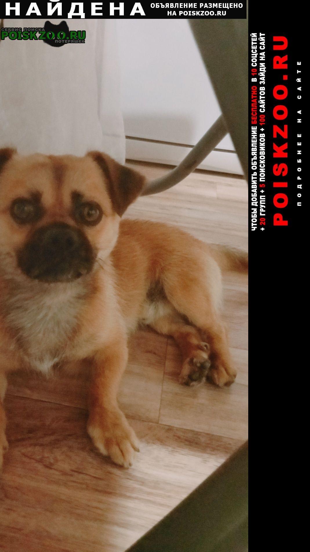 Найдена собака кобель недалеко от адмирала пустошкина Анапа