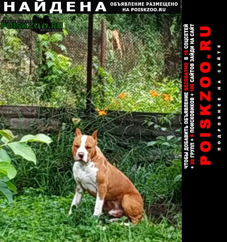 Найдена собака кобель Пятигорск
