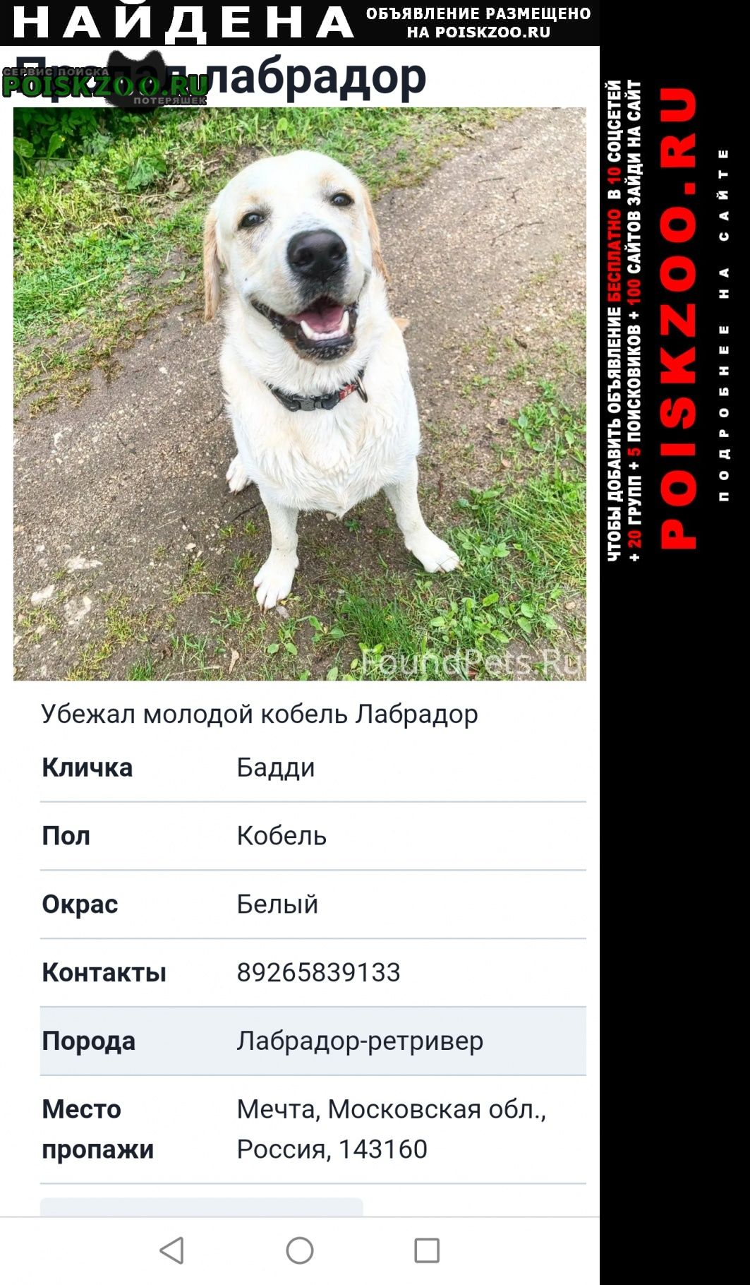 Найдена собака кобель Можайск